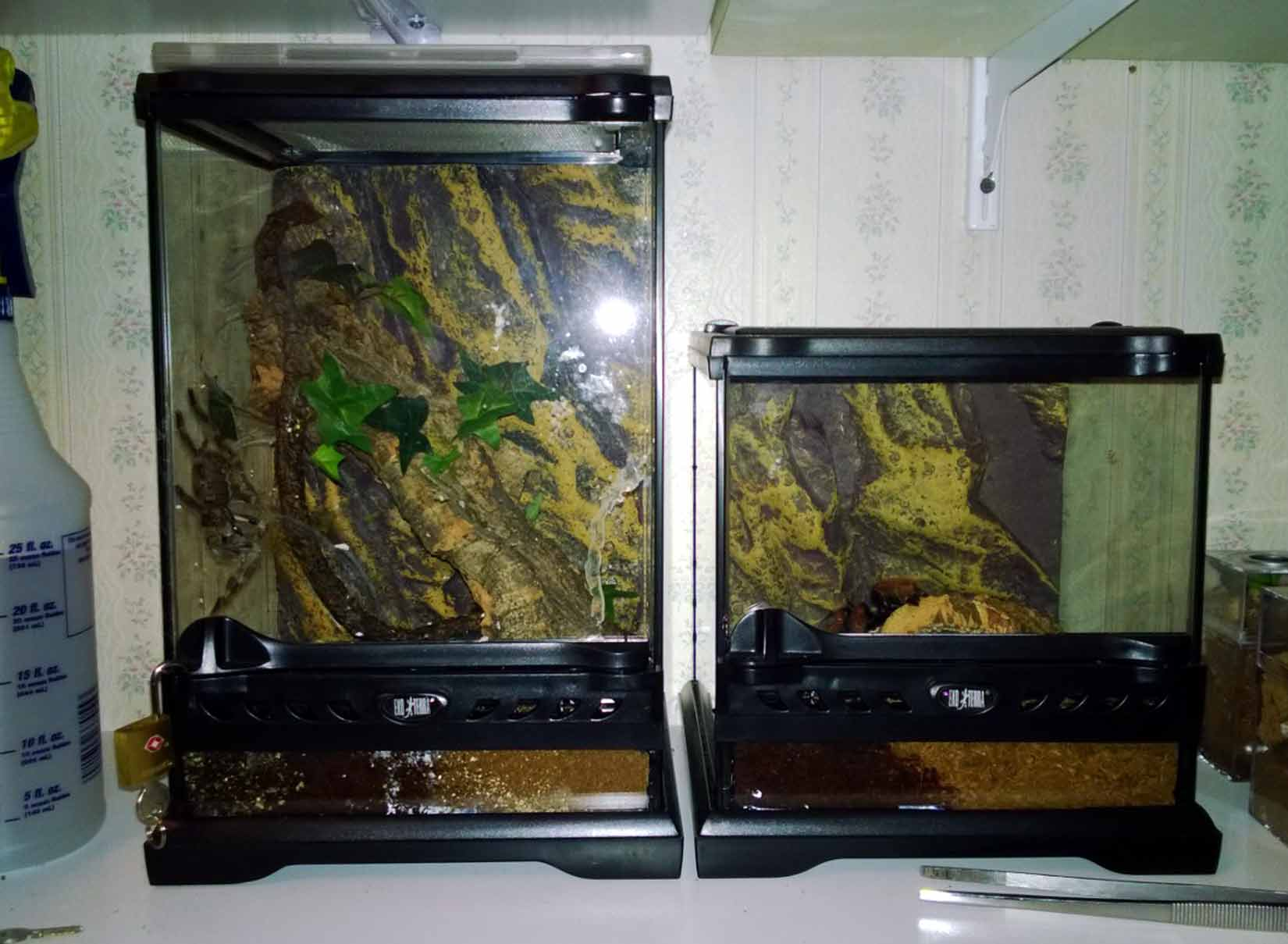 tarantula enclosures premium and diy tom 39 s big spiders. Black Bedroom Furniture Sets. Home Design Ideas