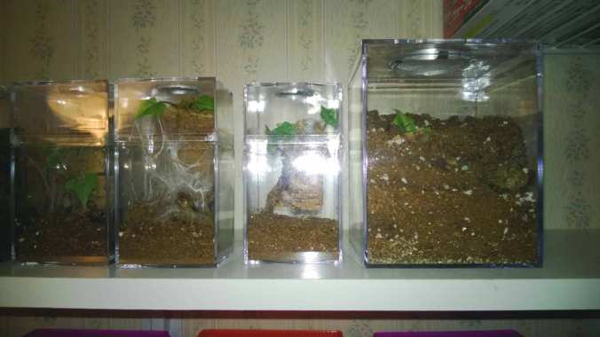 Spiderling and Juvenile Enclosures from Jamie's Tarantulas. These are sold as kits with all of the fixings.