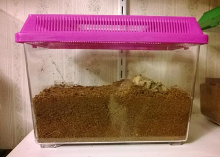 Medium Sized Kritter Keeper/Pet Keeper. I use these to house my juveniles.