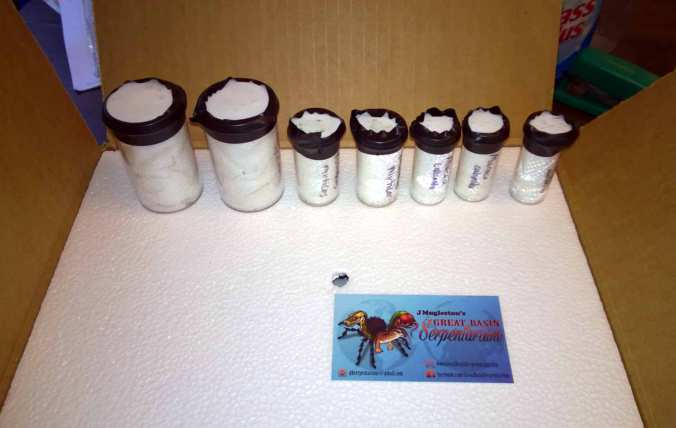 The vials holding my new slings from GBS. All were well packed and labeled.