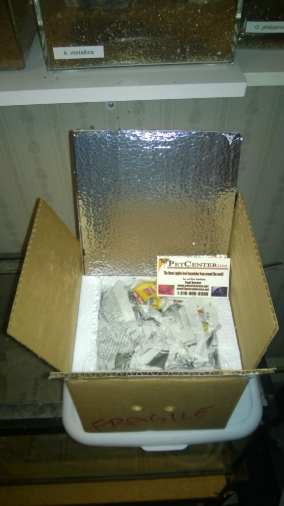 Pet Center sent the Ts in a foam lined box with a heat pack and damp newspaper for padding.