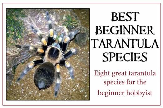 Beginner-species