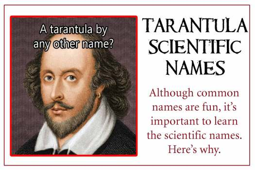 Scientific-names