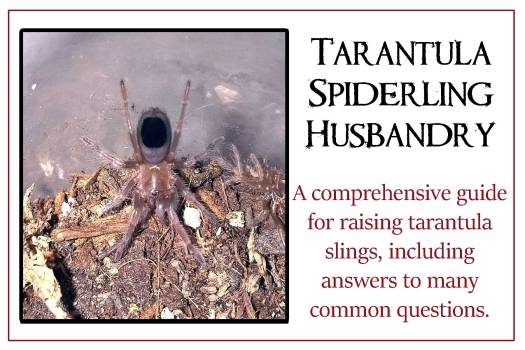 Tarantulas-slings-button