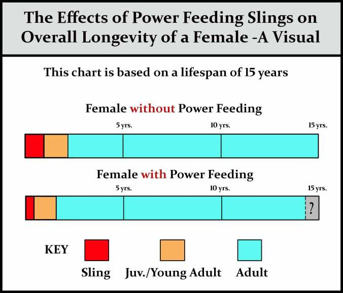 Power-feeding-females-chart