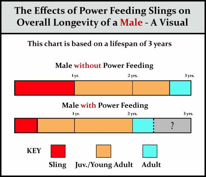 Power-feeding-males-chart-w