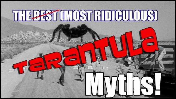 tarantula-myths