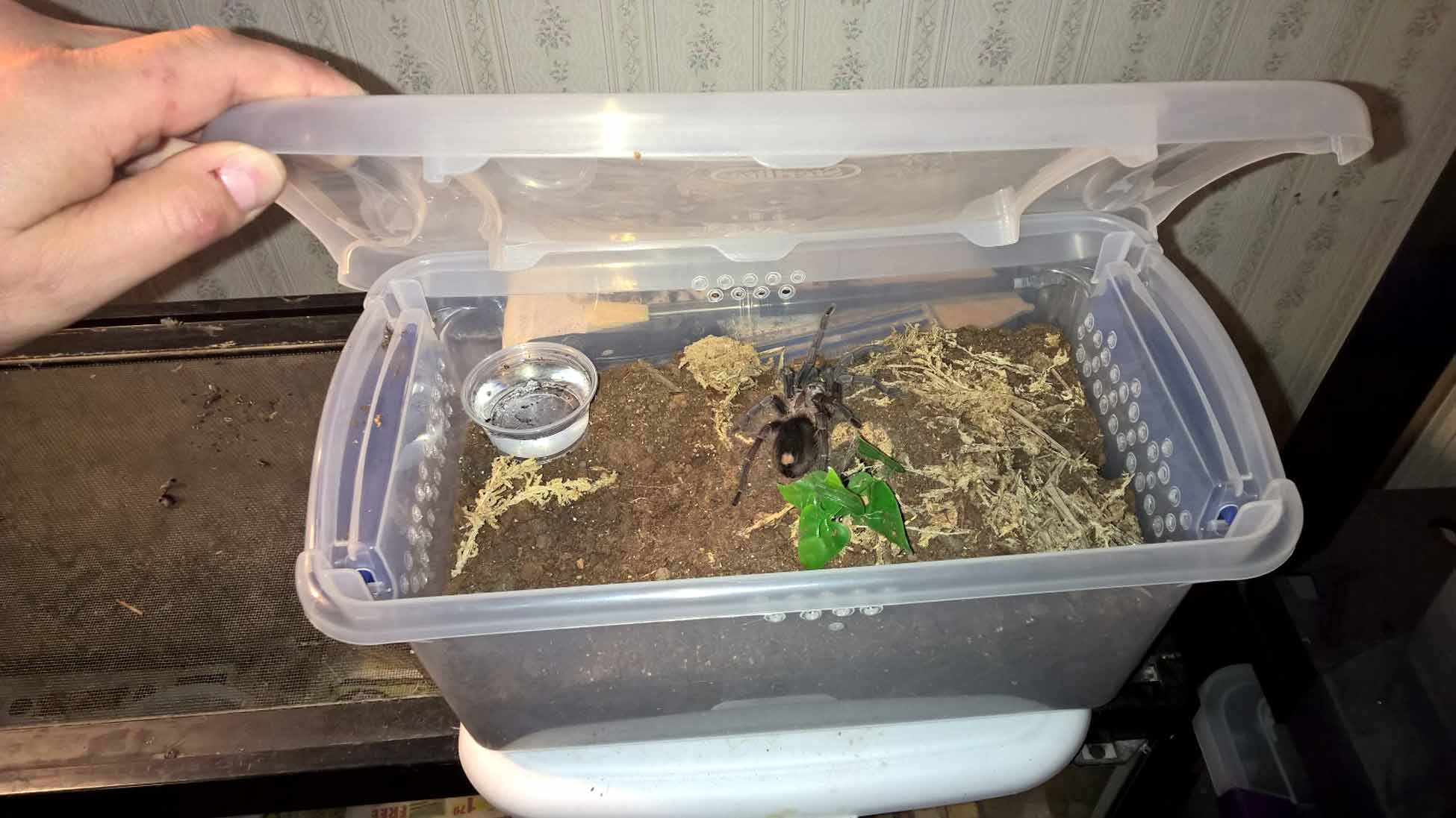 Enclosures Tom S Big Spiders