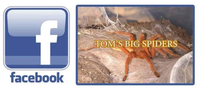 Toms-big-spiders-facebook
