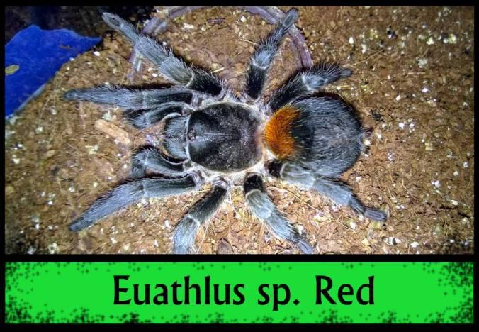 EUATHLUS