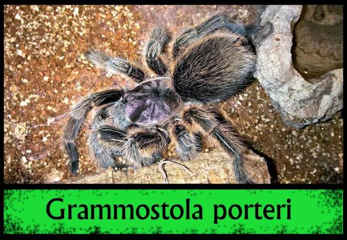 G-PORTERI