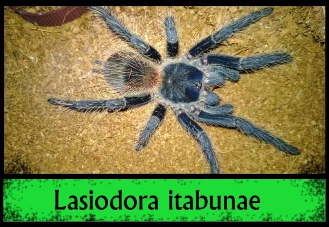 L-ITABUNAE