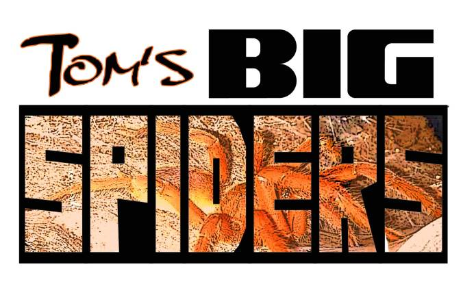 Tom's-big-Spiders-logo-3