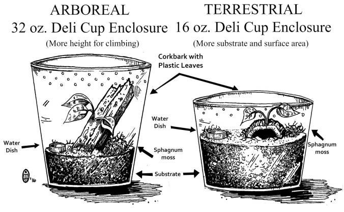 Arborial-vs-terrstrial