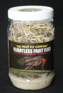 Flightless fruit flies