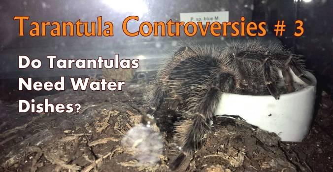 Tarantula-controvesies-3