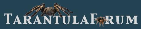 tarantula-forum-banner