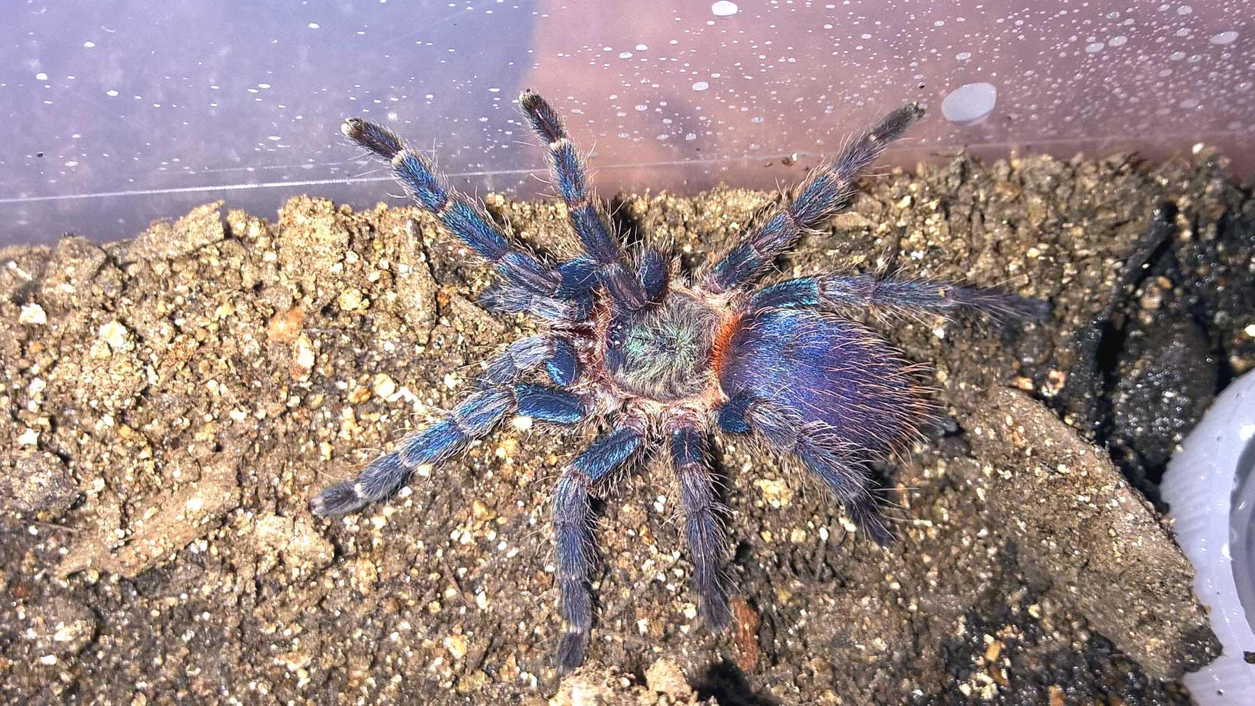 Uncategorized | Tom\u0027s Big Spiders