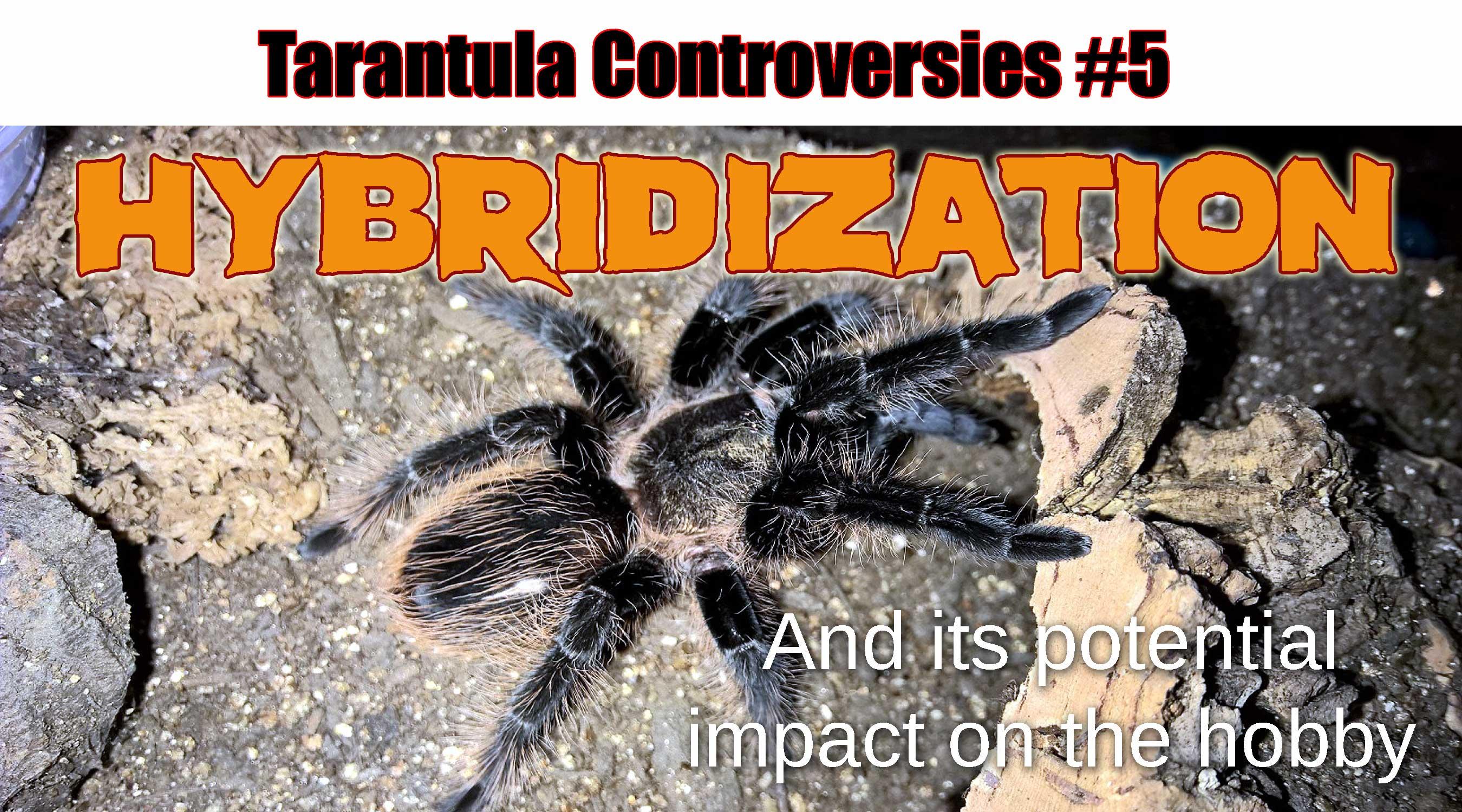 tarantulas | Tom\u0027s Big Spiders